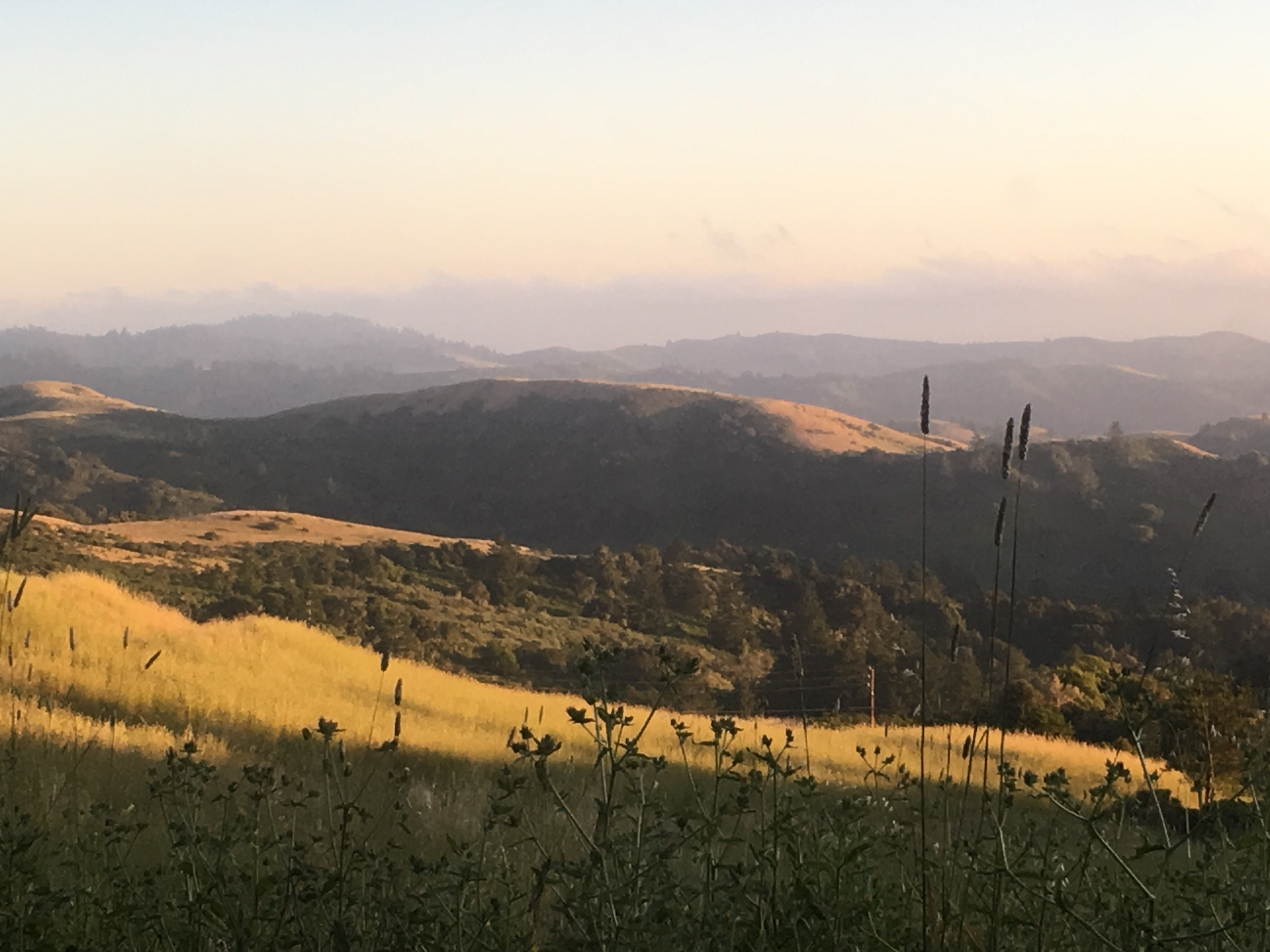 Djerassi landscape photo from hillside - late afternoon sun