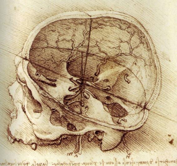 wikimedia_leonardo_skull