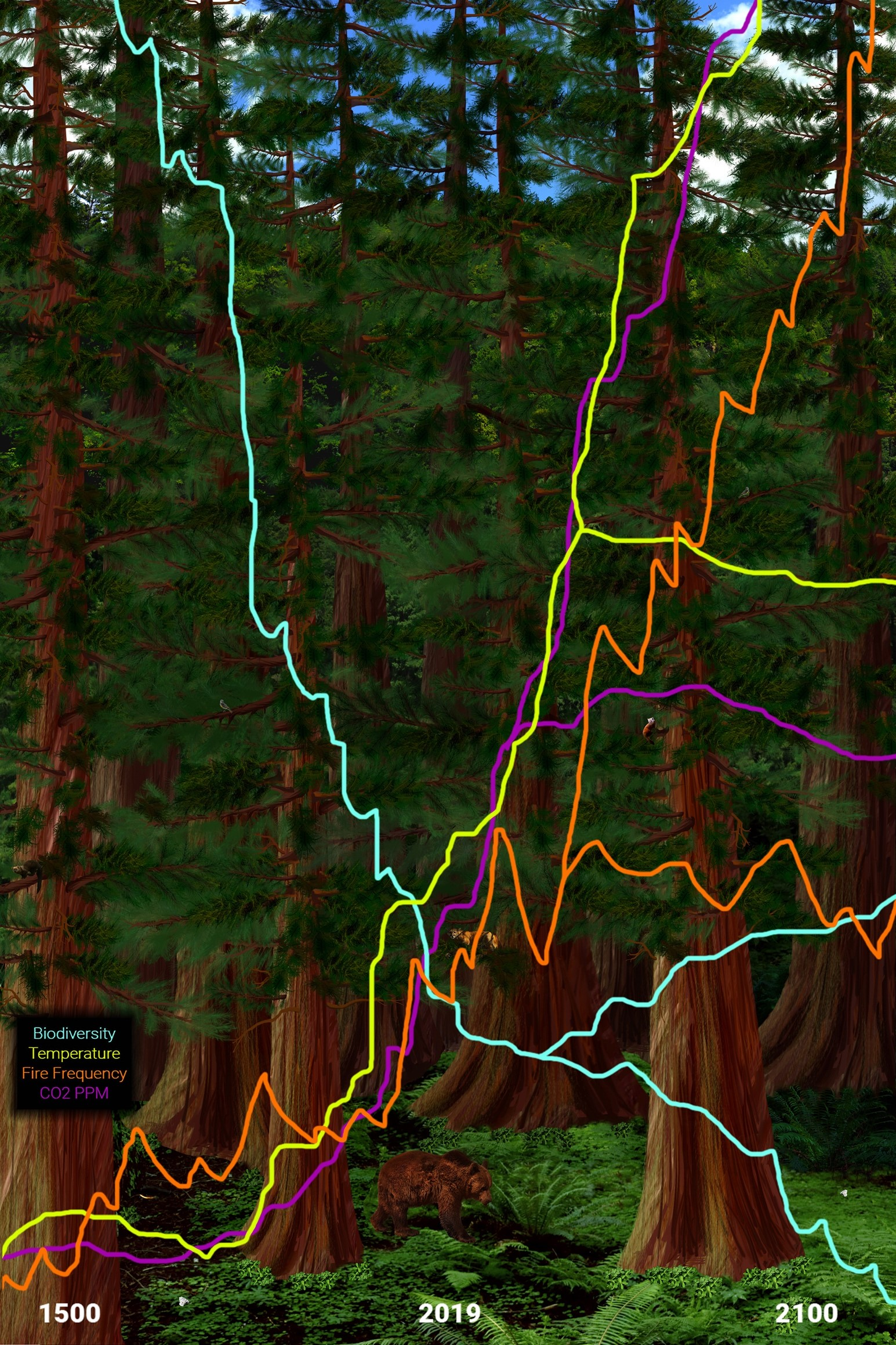 Digital paint and photography showing a thriving Santa Cruz coastal redwood ecosystem in year 1500, as seen in the interactive program Enviro-Envision at the Receivership Exhibition.(© Kathleen Deck)