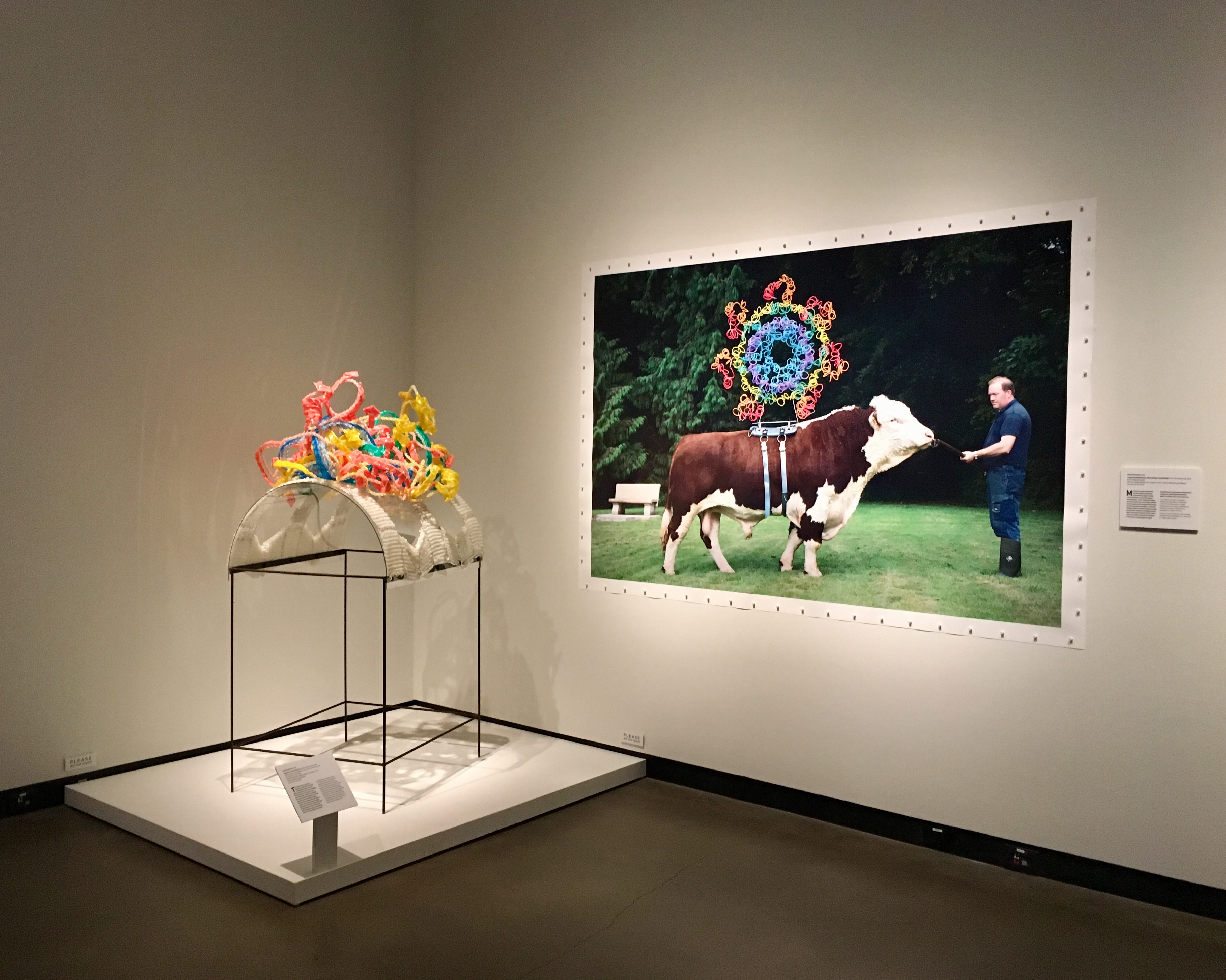 Maria McKinney, Longevity/Apoptosome, Black Water Lad (HE2067) [image] and Myostatin [sculpture], from the series Sire (2016). Image by Molly Renda, courtesy of the Gregg Museum of Art & Design.